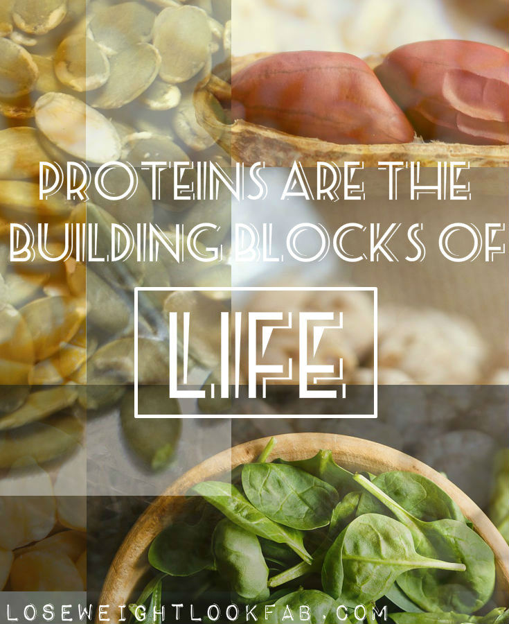 Plants that are a good source of protein